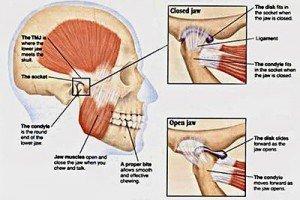 TMJ-anatomy