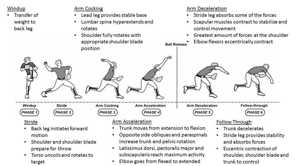 Phases of the pitching motion