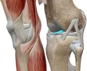 acl sports injury clinic thornhill